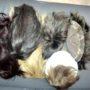 Выпадение волос в раннем возрасте